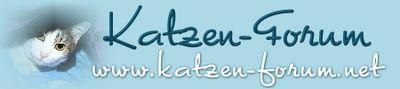 Katzen Forum