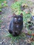 Katzen Mogli klein.jpg