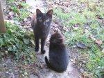 Katzen Mutter&Hühnchen.jpg