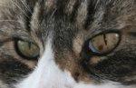 Merlin-Augen2.jpg