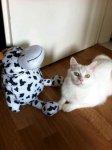 Pamuk und Kuh.jpg