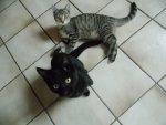 Luna und Mira.jpg