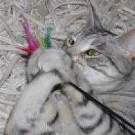 Katze abgemagert trotz fressen