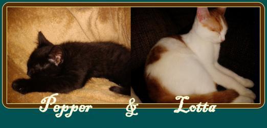 HILFE!!! Katze macht seit Tagen auf den Teppich | Katzen